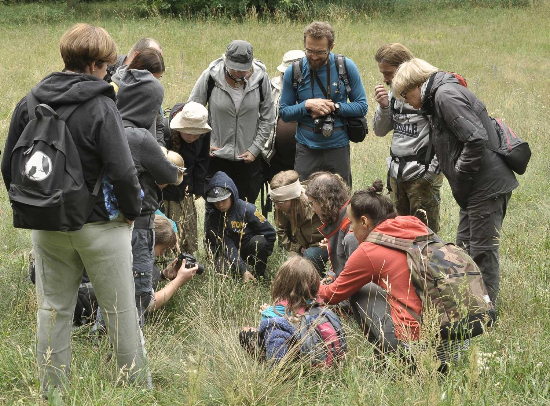 Mrówki---gniazdo-w-trawie